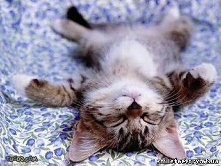 Спящие животные, юмор с животными, смешные животные, приколы